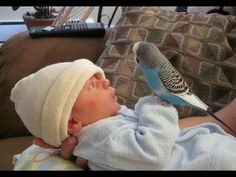 Cute Bird Falling in Love with Baby - Funny Parrots and Babies Compilation Best Friend Dog And Baby Take A Bath Funny Time Together - Cute Dogs and Babies. Funny Birds, Cute Birds, Cute Funny Animals, Cute Baby Animals, Cute Dogs, Animal Pictures, Cute Pictures, Beautiful Pictures, Funny Parrots