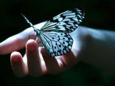 Rédacteur invité, lettre d'une grand-mère à un petit bébé papillon (deuil périnatal) - Le Baby Blog - Doctissimo