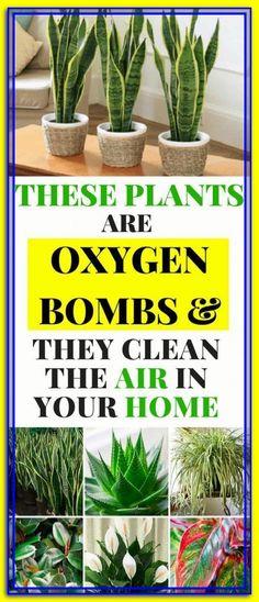Air Plants, Garden Plants, Indoor Plants Clean Air, House Plants Air Purifying, Air Cleaning Plants, Garden Hose, Vegetable Garden, Container Gardening, Gardening Tips