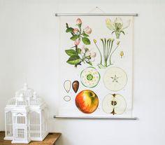 Vintage White Botanical Chart Apple Tree  by BonnieandBell on Etsy, £120.00