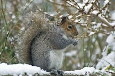 Squirrel lessons from Gary Garth | kentuckymonthly.com