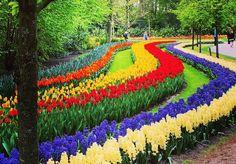 Como visitar o parque das flores na Holanda.
