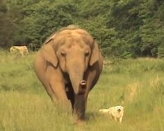 Amazing friendship between dog and elephant continues to inspire (VIDEO)