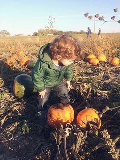 things to do with kids in the fall:  pumpkin picking