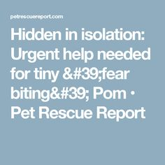 Hidden in isolation: Urgent help needed for tiny 'fear biting' Pom • Pet Rescue Report