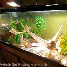 What To Feed A Baby Bearded Dragon? Bartagamen Terrarium, Lizard Terrarium, Bearded Dragon Terrarium, Bearded Dragon Habitat, Bearded Dragon Cage Ideas, Bearded Dragon Tank Setup, Lizard Tank, Reptile Room, Reptile Cage
