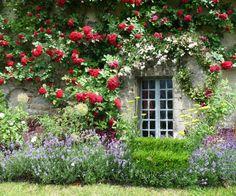 Rose Paghera, Collezioni Uniche per Giardini da Sogno | Shabby Chic Mania by Grazia Maiolino