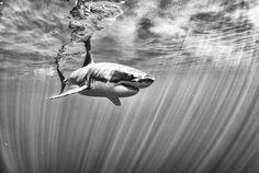 Photographer Anuar Patjane captures a shark here.