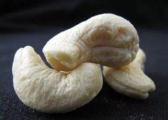 Not Dried Larva!   C