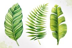 Tropical leaves. Watercolor vector. - Illustrations