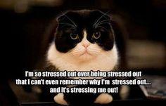 Funny cats - http://jokideo.com/funny-cats-15/
