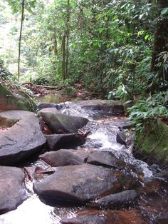 Guyane- Cascades de Fourgassié - levoyagedetanite.over-blog.com