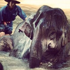 """""""Washing of the elephants in Thailand"""", beautiful image of a creature we must protect by @yogi_ank"""