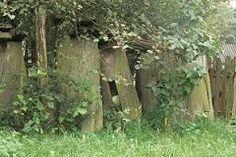 Znalezione obrazy dla zapytania stare ule
