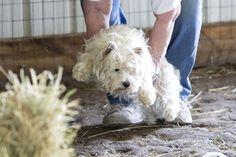 Barn Hunt trial @ Hortonville, WI - July 2013