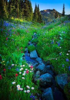Summer Creek by Inge Johnson. Abundance of wildflowers along creek in Mount Rainier National Park in Washington state, USA