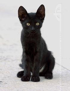 Composition in Black and White (Feral Kitten) ~ thrumyeye
