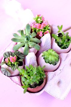 DIY Easter decoration: plant Easter eggs with succulents - Easy Idea Succulent Arrangements, Succulents, Diy Osterschmuck, Easter Festival, Egg Decorating, Decorating Hacks, Decorating Kitchen, Easter Table Decorations, Easter Season