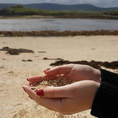 Relax time on coral beach | #ecosse #Scotland #sand #beachday #isleofskye #scottishvines