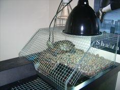 Turtles pets