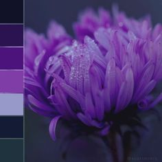 #colorswatches #nature #flora