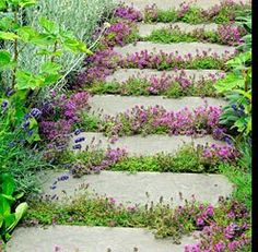 Adding low growing plants between stepping stones adds a wonderful informality. Elfin thyme for hot, sunny spots and blue star creeper for shadier paths Herb Garden, Garden Paths, Lawn And Garden, Garden Art, Garden Landscaping, Garden Design, Bile Duct, Ground Cover Plants, Courtyards