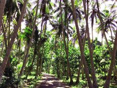 °On the way to Penida village and to our accommodation. Padang, Bali, Strand, Plants, Travel Report, Island, Places, Viajes, Plant