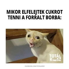 Welches Fach findet ihr am einfachsten? Everything Funny, Just Kidding, Funny Moments, Haha, Funny Pictures, Jokes, Hungary, Funny, Chistes