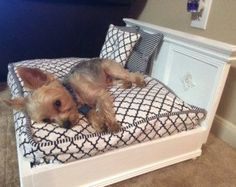 Teeny Tiny Pet Bed - Dog Bed - Cat Bed - Size Variations