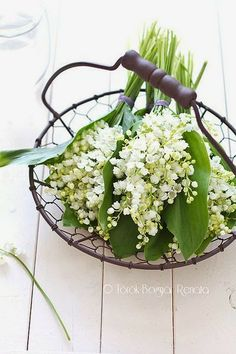 Lily of the valley !