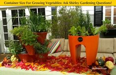 Container Size For Growing Herbs and Vegetables. Ask Shirley you gardening questions. EdenMakers.com