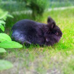 Olivia my rabbit #igers #igdaily #igerstorino #igersitalia #instamood #instagramer #instaddicted #insta__mazing #instacool #cute #cool #rabbit #animals #nature_lovers #picoftheday #shotoftheday #smartphonegraphy #photooftheday
