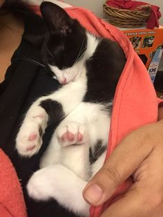 And this cutie who fell asleep in her human's sweater.