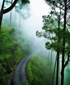 Top 11 Honeymoon Destinations In India For A Perfect Romantic Trip Beautiful Places To Travel, Best Places To Travel, Cool Places To Visit, Best Places To Honeymoon, Best Honeymoon Destinations, Travel Destinations, Romantic Vacations, Romantic Travel, Romantic Nature