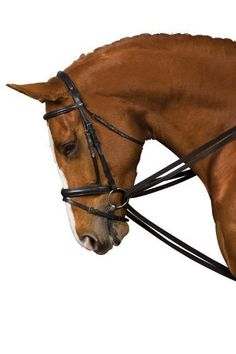 """Kincade Leather Draw Reins - Brown, 1x95 by Weatherbeeta. $33.29. Kincade Leather Draw ReinsThese leather draw reins are made with leather loop ends with buckle so you don't have to undo your girth to take them off. With Kincade's extensive variety of equestrian products it is easy to find just the equipment you need at the price you want. The Kincade line of matching bridlework and accessories offers the perfect combination of quality and price.Size: 5/8"""" x 95"""""""