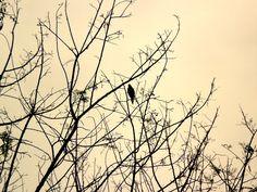 bird - socorro - sp