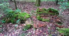 Moss-covered treestump. Denmark. Taken with Sony Xperia Z1 smartphone