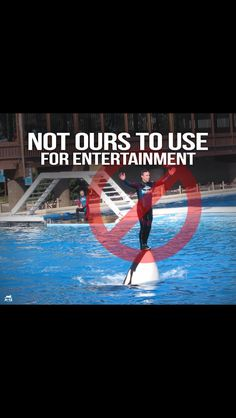 Boycott Sea World. Animals are not for our entertainment