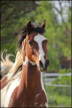 western quarter paint horse paint pinto horse Gypsy Vanner Indian pony~ I LOVE PAINT HORSES