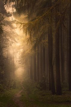 mysteriously way - Germany, Münsterland