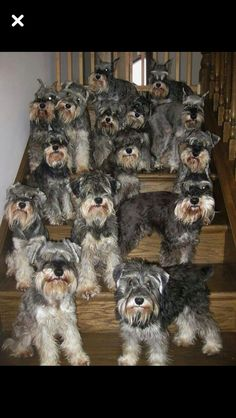 OMG...It's the stairway to heaven!