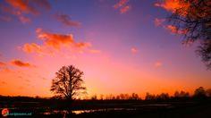 Ondergaande zon bij de boom in de nieuwe natuur
