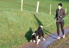 photo du blog de Laurianne : L'usine à bulle Photos Du, Dogs, Inspiration, Dog Walking, Belt, Animaux, Biblical Inspiration, Pet Dogs, Doggies