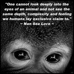 One cannot look deeply into the eyes of an animal and not see the same depth, complexity and feeling we humans lay exclusive claim to | Anonymous ART of Revolution