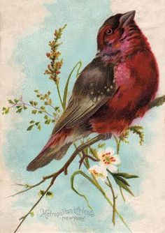 FREE *The Graphics Fairy LLC*: Free Vintage Clip Art - Cute Chunky Bird