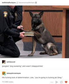 Not only do dogs bring joy to our lives as adorable and loyal companions, they also just so happen to do some pretty hilarious things too which are often made even better when the internet gets its hands on the evidence. Here are 22 dog pictures that will never stop being funny.1. This dogs who's not ready to accept responsibility.2. This dog who's destined for space.3. This dog who's taking the feud with the mailman to the next level.4. This dog which has evolved into asandwich.5. Come...