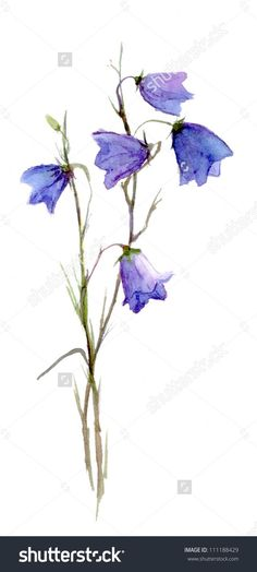 Watercolor Projects, Watercolor Cards, Watercolour Painting, Watercolor Flowers, Watercolours, Bluebell Tattoo, Belle Tattoo, Blue Bell Flowers, Wildflower Tattoo