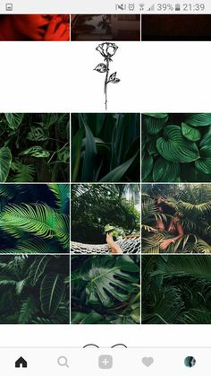 Instagram Feed Layout, Instagram Design, Instagram Tips, Instagram Story, Pastel Roses, Blog Layout, Instagram Highlight Icons, Editing Pictures, Beauty Photos