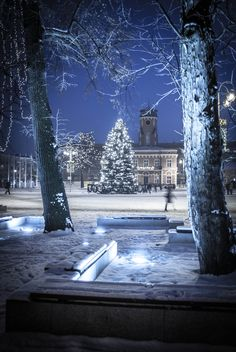 ~J so pretty , blue Christmas. in Czestochowa, Poland (by Piotr Szyma on Christmas Scenes, Blue Christmas, Winter Christmas, Christmas Lights, Classy Christmas, Xmas, Winter Holidays, Beautiful World, Beautiful Places