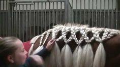 5 Pferdefrisuren für den Alltag\Turniersport mit langer Mähne | Schyla P...